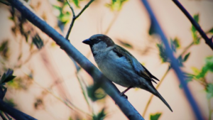 natural branche Finch perch
