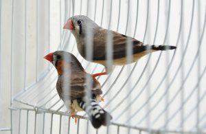 Finch birdcage